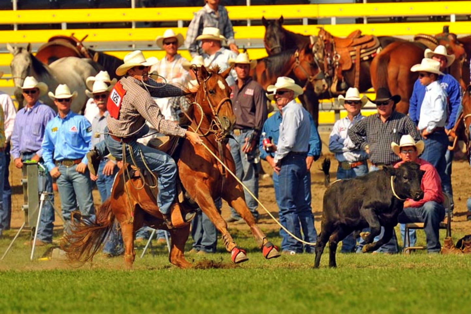 Calf Roping Wallpaper And Calf Roping For The 2011