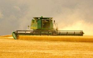 brandon-cutting-wheat