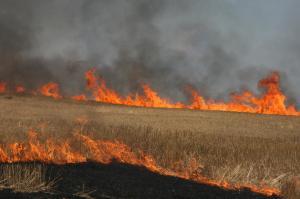 wheat+fire+055_1_1